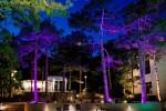 Ночное освещение деревьев